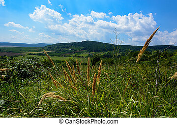 Summer landscape with grass in Hungary