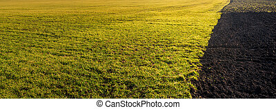 Landscape with green field at sunset and plowed half with soil on one side.