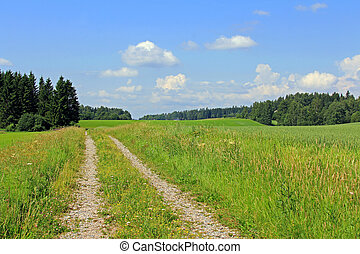 Summer landscape with green fields, sky and rural road