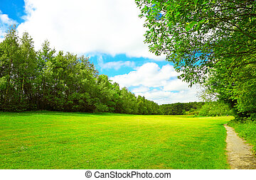 Summer landscape with green grass