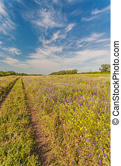 Summer landscape with green grass