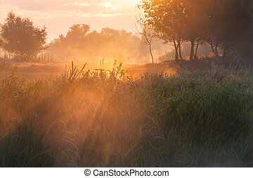 Summer landscape with misty morning