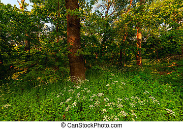 Summer landscape with morning forest
