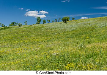 landscape  with native grasses in hilly area using as a pasture near Dnipro city in Ukraine
