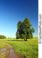 summer landscape with road and lime-tree