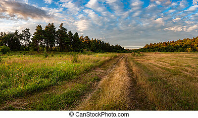 Summer landscape with road through the meadow