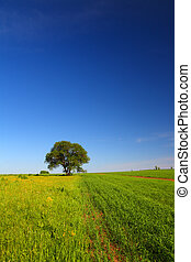 summer landscape with single tree