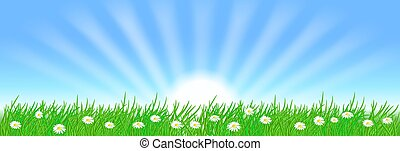 Summer landscape with sun rays in the sky and meadow flowers