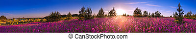 summer landscape with the blossoming meadow, sunrise
