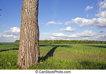 summer landscape with tree and field