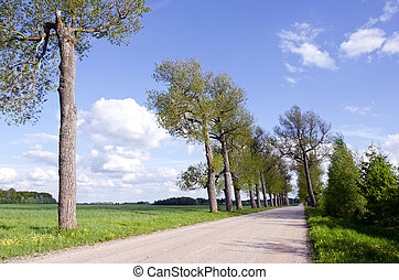 summer landscape with tree and road
