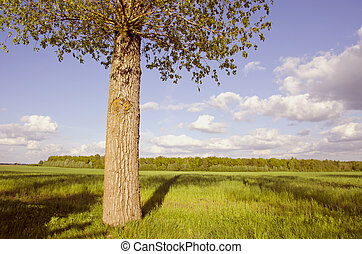 landscape with tree and shadows