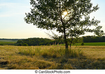Summer landscape with tree on meadow