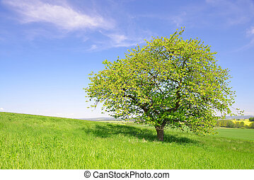tree on meadow