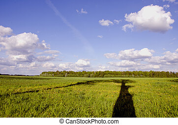 summer landscape with tree shadow