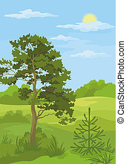 Summer landscape with trees and blue sky - Summer woodland ...