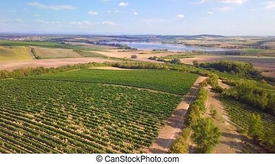 Summer landscape with vineyards in countryside, aerial bird...