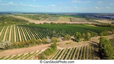 Summer landscape with vineyards in countryside, aerial view...