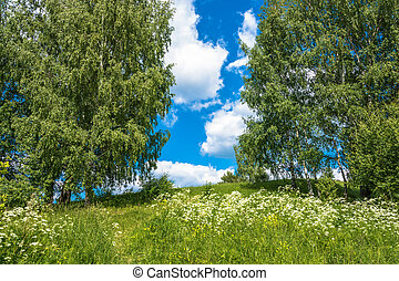 Summer landscape with white flowers and green birches. -...