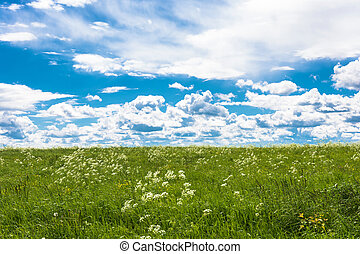 Summer landscape with white flowers. - Beautiful summer...