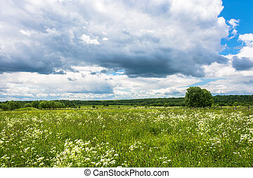 Summer landscape with white flowers.