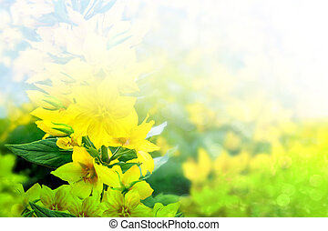 Summer landscape with yellow wildflowers