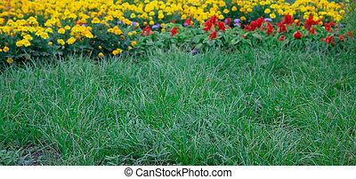 Summer lawn with a green grass