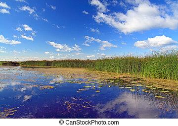 summer marsh under cloudy sky