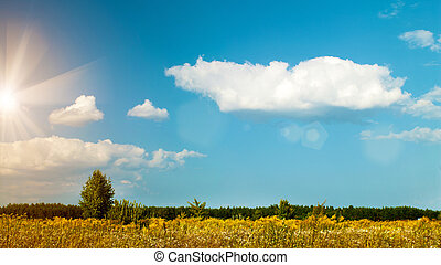 Summer meadow, abstract environmental backgrounds