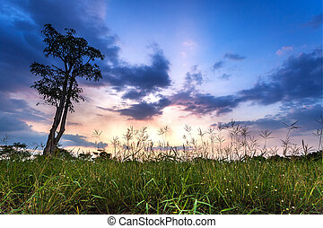 summer meadow at sunset