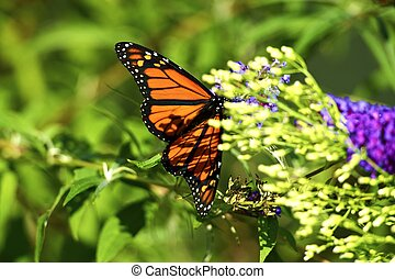 Summer Meadow Butterfly. Closeup Nature Photography