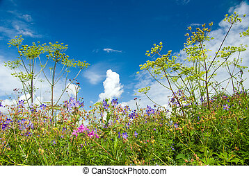 Summer meadow in sunny weather.