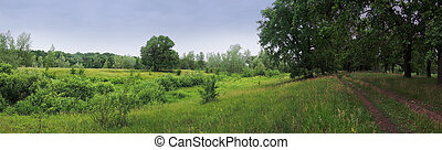 summer meadow in the woods on a cloudy day