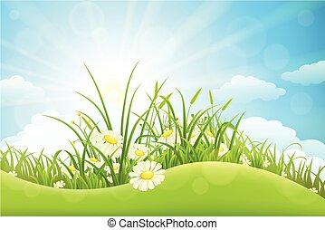 Summer meadow landscape