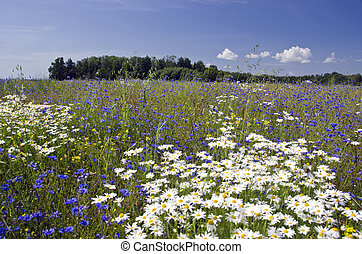 summer meadow landscape with wild flowers