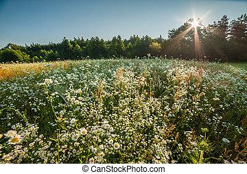 Summer meadow near forest