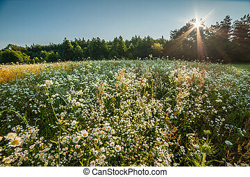 Summer meadow near forest