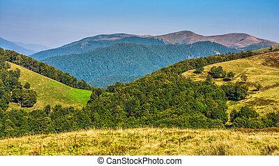 summer meadow on hillside of mountain range - summer...
