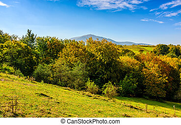 summer meadow on hillside of mountain range - early autumn...