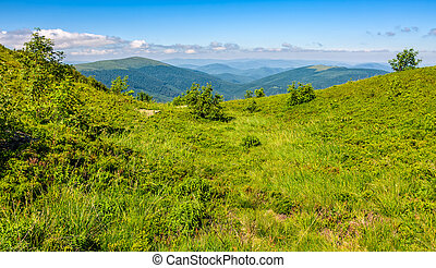 summer meadow on hillside of mountain range - summer...