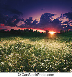 Summer meadow on the dusk, abstract natural backgrounds
