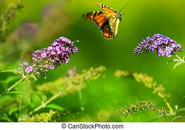 Summer Meadow. Monarch Butterfly in the Fly and Green...