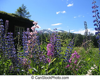 Summer meadow - Summer flowers and summer sky