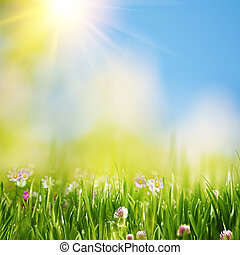Summer meadow under bright yellow sun, natural backgrounds
