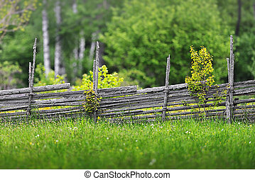 Summer meadow with a wooden fence