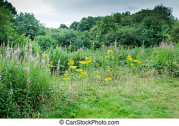 summer meadow with wild flowers
