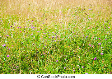 Summer meadow with wildflowers