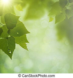 Summer Morning. Abstract natural backgrounds. Green leaves with dew water drops