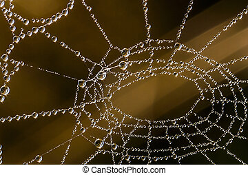 summer morning dew on spider web with sunrise refraction and...