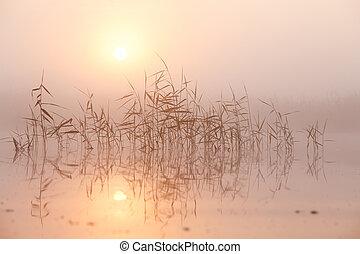 Summer morning fog on lake